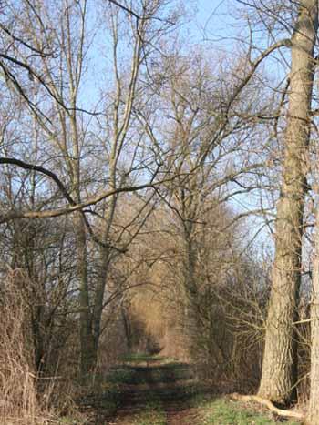 Schwarzer Weg: Herzklopfen kostenlos!?