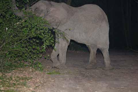 Auf freiem Fuß: Elefanten in Schulzendorf!