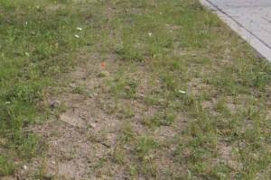 Mehrere Hektar Rasenflächen müssen durch die Gemeinde im Jahr gepflegt werden. (Foto: Wolff)