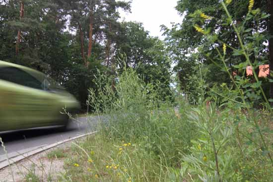 Jörg Sonntag argumentierte 2015, dass sich die externe Vergabe des Grünschnitts nicht bewährt hat. In diesem Jahr liegt die Rasenmahd in der Hand des Bauamtschefs. Nicht überall in der Gemeinde ist das jedoch ein Vorteil . (Foto:mwBild)