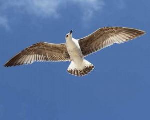 Zeuthen: Geflügelpest bei Wildvogel festgestellt