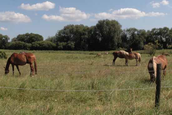 Offenbar haben Tierhasser auf die Pferde geschossen. (Foto: mwBild/Symbolfoto)