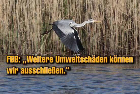 Graureiher und Enten sind am verseuchten Gewässer zu Hause. (Foto:mwBild)