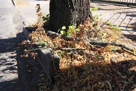 Hier hat eine Wurzel den Bordstein ausgehoben. (Foto:mwBild)