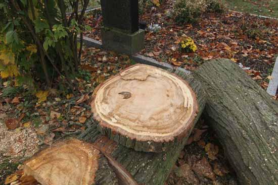 So sieht kein gesunder Baum aus. (Foto: mwBild)