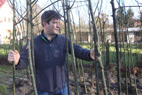 Professor Jonas Reif mitten in japanischen (Zeuhtener) Schnurbäumen. (Foto: mwBild
