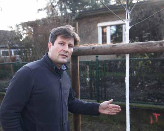 Der erste Schnurbaum wurde in der Teichstraße gepflanzt. Die weiße Farbe am Stamm dient dem Schutz vor Rissen, sagt der Wissenschaftler. (Foto: mwBild)